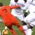 Preporođena Nizozemska pobijedila Francusku, Njemačka ispala u Ligu B